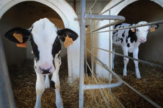 5 thí nghiệm tàn nhẫn đến rơi nước mắt trên động vật vẫn đang diễn ra mỗi ngày - Ảnh 3.