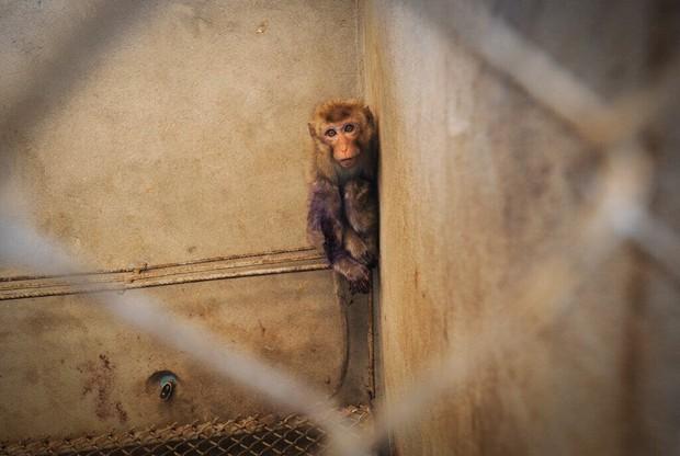 5 thí nghiệm tàn nhẫn đến rơi nước mắt trên động vật vẫn đang diễn ra mỗi ngày - Ảnh 4.