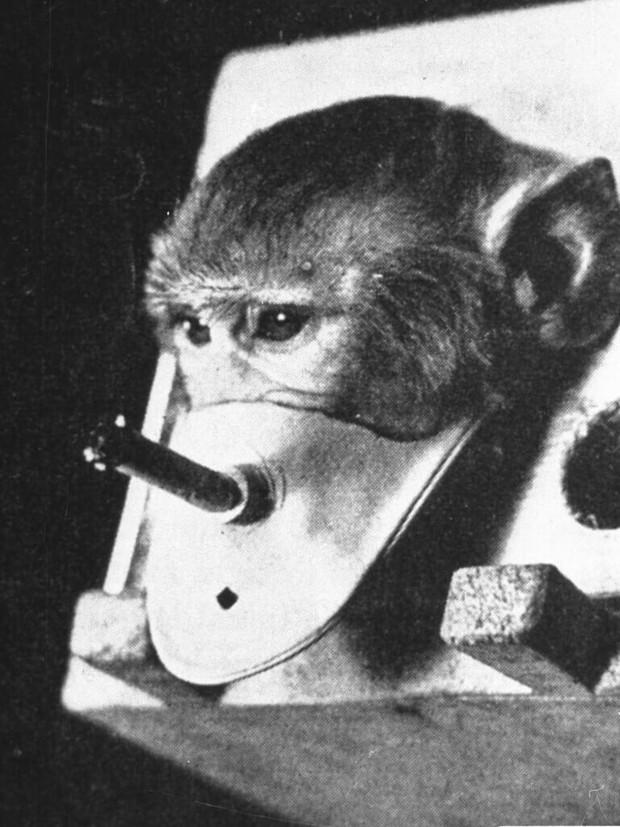 5 thí nghiệm tàn nhẫn đến rơi nước mắt trên động vật vẫn đang diễn ra mỗi ngày - Ảnh 7.