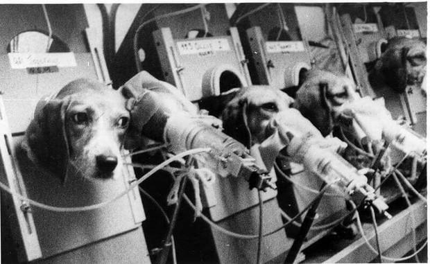 5 thí nghiệm tàn nhẫn đến rơi nước mắt trên động vật vẫn đang diễn ra mỗi ngày - Ảnh 8.