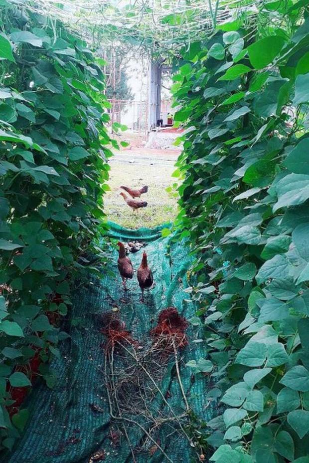 Khác xa với hình ảnh trên thảm đỏ, Lý Nhã Kỳ giản dị đi dép tổ ong, diện đồ mặc nhà khoe khu nông trại 50 héc - ta đất tại Đà Lạt - Ảnh 3.