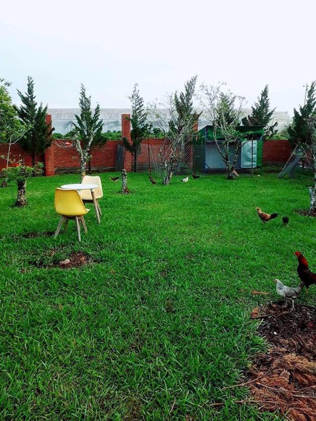 Khác xa với hình ảnh trên thảm đỏ, Lý Nhã Kỳ giản dị đi dép tổ ong, diện đồ mặc nhà khoe khu nông trại 50 héc - ta đất tại Đà Lạt - Ảnh 4.