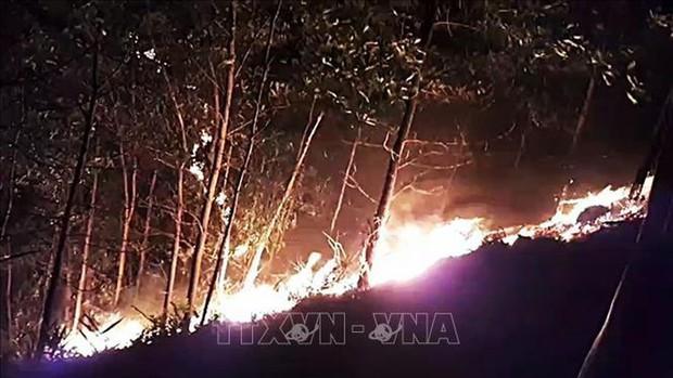 10.000 du khách phải sơ tán khỏi bãi biển nổi tiếng của Croatia do cháy rừng - Ảnh 1.
