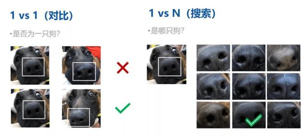 Trung Quốc đã có công nghệ nhận diện chó bằng... vân mũi: Vừa giúp tìm boss đi lạc, vừa phạt chủ thiếu văn minh - Ảnh 2.