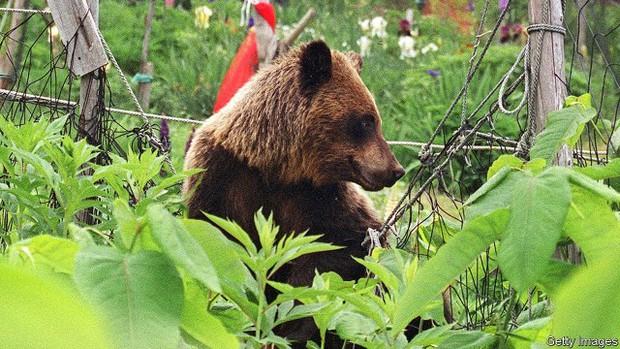 Dân số Nhật Bản sụt giảm trầm trọng, gấu tận dụng cơ hội táo tợn hoành hành khắp nơi - Ảnh 1.