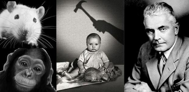 Loạt thí nghiệm tâm lý về tình mẫu tử bị chỉ trích là vô nhân đạo nhưng lại đặt nền tảng cho phương pháp nuôi dạy con của cha mẹ hiện đại - Ảnh 2.