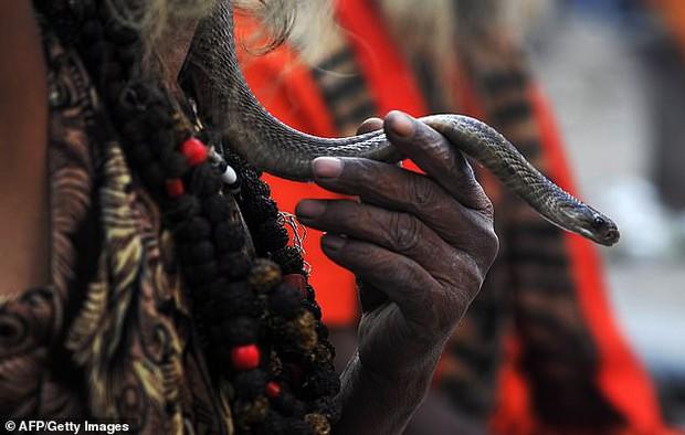 Bị rắn độc cắn, người đàn ông quyết tâm cắn lại để trả thù nhưng phải nhận kết cục đau đớn vì sự sơ suất của mình - Ảnh 1.
