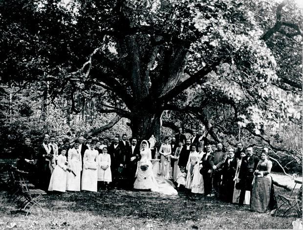 Chuyện về cây sồi kỳ lạ mai mối cho 100 cặp tình nhân nhưng bản thân mãi cô đơn sau khi thê tử kém 300 tuổi qua đời - Ảnh 3.