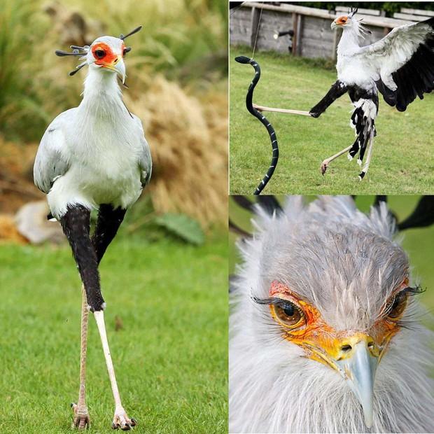Nàng 'chim thư ký' có cặp chân dài kiêu sa và hàng mi cong sang chảnh khiến các chị em cũng phải ghen tỵ - Ảnh 1.