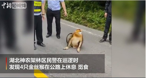 Xuống núi vi hành, 4 vị Tôn Hành Giả quý hiếm ngay lập tức bị nhà chức trách bắt giữ, gửi về địa phương - Ảnh 2.