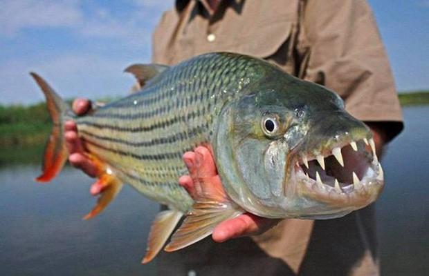 Điểm danh 10 loài cá có biệt tài săn mồi trên cạn trong thế giới tự nhiên - Ảnh 13.