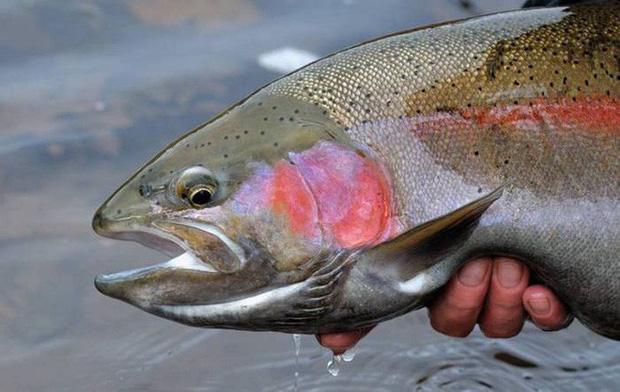 Điểm danh 10 loài cá có biệt tài săn mồi trên cạn trong thế giới tự nhiên - Ảnh 15.