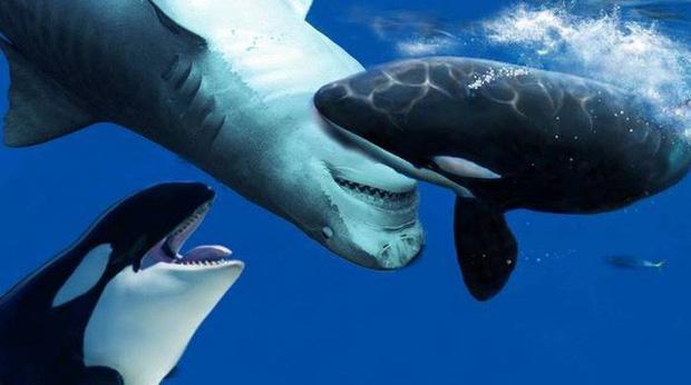 Điểm danh 10 loài cá có biệt tài săn mồi trên cạn trong thế giới tự nhiên - Ảnh 5.