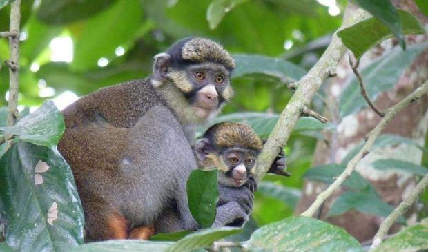Sách Đỏ mới cập nhật: Lần đầu tiên trong lịch sử có hơn 100.000 loài bị đe dọa, 28.300 mang nguy cơ tuyệt chủng - Ảnh 3.