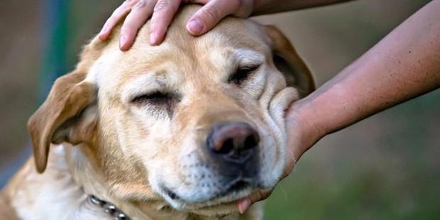 Các nhà nghiên cứu tiếp tục chứng minh: vuốt ve chó, mèo sẽ giúp sinh viên giảm căng thẳng - Ảnh 2.