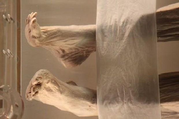 Câu chuyện bí ẩn về xác ướp vị phu nhân Trung Hoa kỳ lạ nhất thế giới: 2.000 năm tuổi da vẫn mềm, tóc vẫn xanh, có máu chảy trong tĩnh mạch - Ảnh 2.