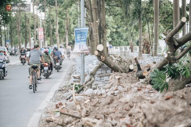 Hà Nội di chuyển gần trăm cây hoa sữa ra bãi rác Nam Sơn, tuyến đường ngổn ngang  - Ảnh 7.