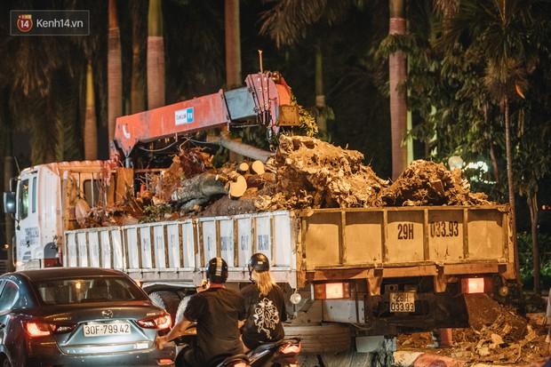 Hà Nội di chuyển gần trăm cây hoa sữa ra bãi rác Nam Sơn, tuyến đường ngổn ngang  - Ảnh 4.