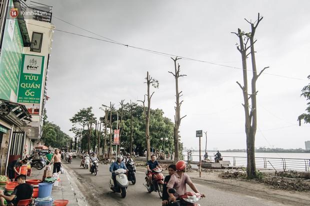 Hà Nội di chuyển gần trăm cây hoa sữa ra bãi rác Nam Sơn, tuyến đường ngổn ngang  - Ảnh 13.