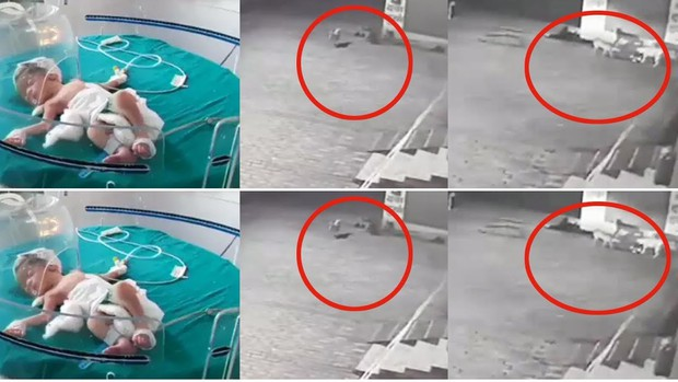 Cảm động cảnh đàn chó hoang giải cứu cứu bé sơ sinh bị ném xuống cống - Ảnh 1.