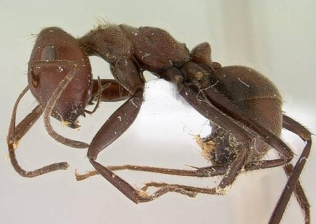 14 sự thật thú vị về tự nhiên mà thầy cô không dạy, sách vở chưa có: Kangaroo cái thích con đực cơ bắp, nhện chỉ giao phối một lần rồi tự cắt của quý! - Ảnh 3.