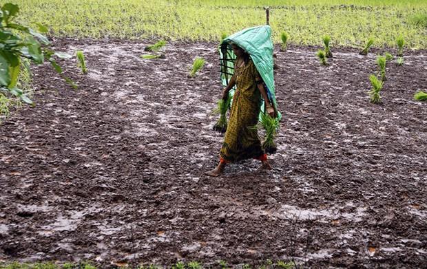 Chấn động hàng loạt nữ nông dân Ấn Độ triệt sản ở độ tuổi 20 - Ảnh 2.