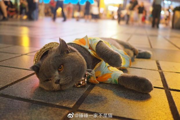 Ra phố tập thể dục giảm cân như chị em, chú mèo 2 tuổi bỗng được già trẻ lớn bé thi nhau săn đón hệt như ngôi sao nổi tiếng - Ảnh 3.
