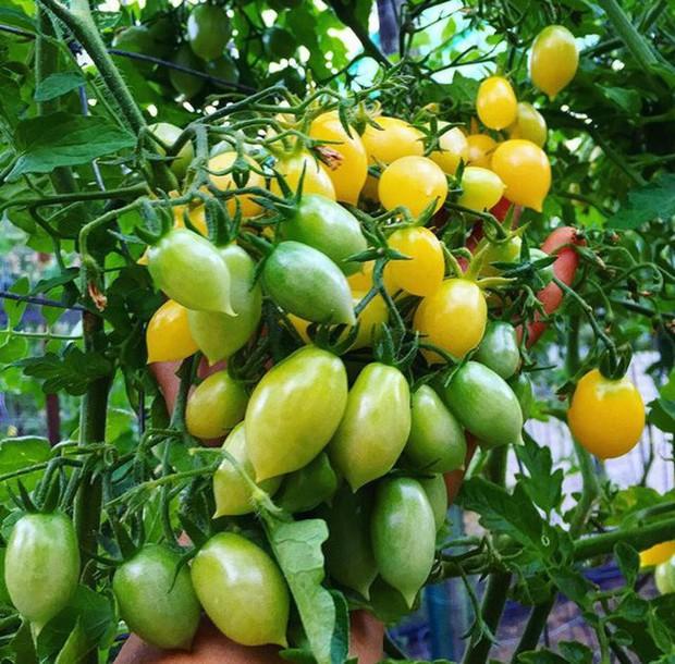 Không những sở hữu khu vườn với đủ loại rau xanh và trái ngọt, bà mẹ 2 con này còn xếp củ quả chụp ảnh siêu đẹp - Ảnh 2.