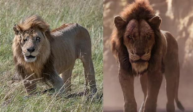 Phát hiện phiên bản xịn của Scar (Vua sư tử) ngoài đời: Vẻ ngoài sắc lạnh đúng với trùm cuối phản diện, bên trong ấm áp đến không ngờ - Ảnh 1.