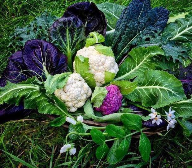 Không những sở hữu khu vườn với đủ loại rau xanh và trái ngọt, bà mẹ 2 con này còn xếp củ quả chụp ảnh siêu đẹp - Ảnh 12.