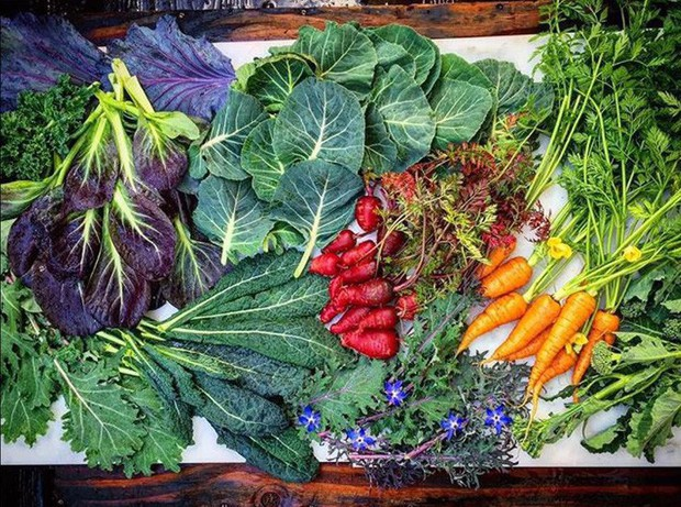 Không những sở hữu khu vườn với đủ loại rau xanh và trái ngọt, bà mẹ 2 con này còn xếp củ quả chụp ảnh siêu đẹp - Ảnh 5.