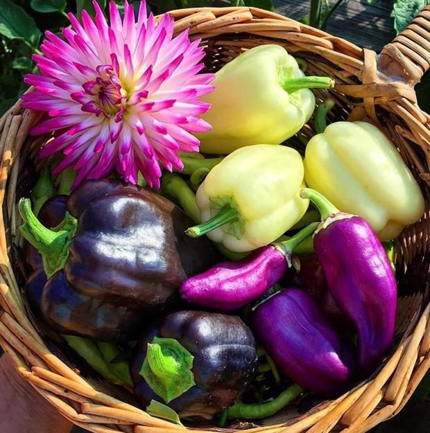 Không những sở hữu khu vườn với đủ loại rau xanh và trái ngọt, bà mẹ 2 con này còn xếp củ quả chụp ảnh siêu đẹp - Ảnh 6.
