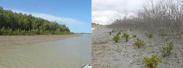 Bạn nghĩ biến đổi khí hậu không nghiêm trọng? Hãy xem nó đã làm gì với nước Úc đây này - Ảnh 3.