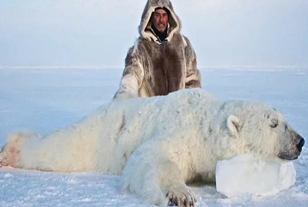 Vạch trần các tour săn bắn 5.000 con gấu Bắc Cực: Huy chương đẫm máu của giới thợ săn giàu có khiến cả thế giới căm phẫn - Ảnh 3.