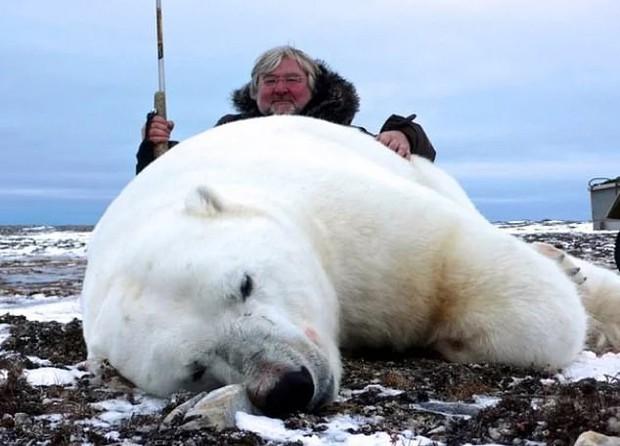 Vạch trần các tour săn bắn 5.000 con gấu Bắc Cực: Huy chương đẫm máu của giới thợ săn giàu có khiến cả thế giới căm phẫn - Ảnh 2.