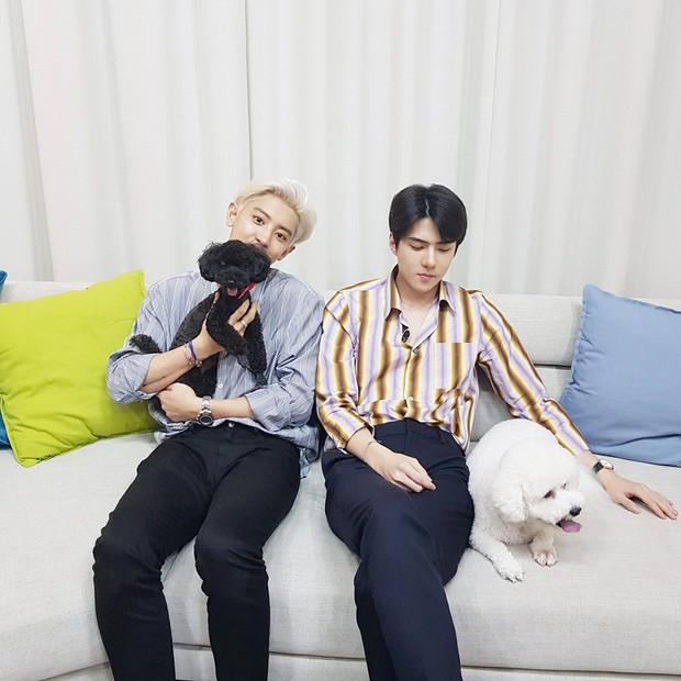 Phá kỉ lục các nhóm nhỏ thuộc Super Junior và GOT7 năm 2019 nhưng EXO-SC vẫn thua đau Baekhyun - Ảnh 4.