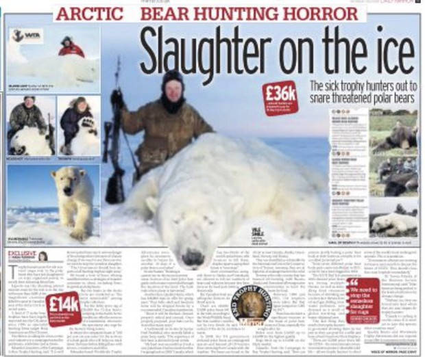 Vạch trần các tour săn bắn 5.000 con gấu Bắc Cực: Huy chương đẫm máu của giới thợ săn giàu có khiến cả thế giới căm phẫn - Ảnh 5.