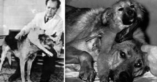 Tội ác dưới cái tên khoa học: Phải chăng con mèo này là minh chứng cho thấy con người đã tàn nhẫn đến mức nào? - Ảnh 3.