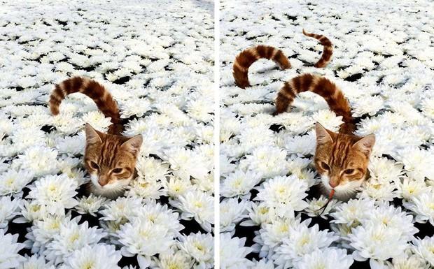 15 pha Photoshop ảo diệu chứng tỏ độ mặn của cư dân Reddit: Đáng yêu, nghiêm túc, lầy lội đủ cả - Ảnh 10.