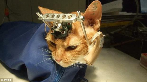 Tội ác dưới cái tên khoa học: Phải chăng con mèo này là minh chứng cho thấy con người đã tàn nhẫn đến mức nào? - Ảnh 4.