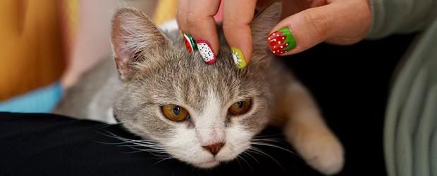 Cuối cùng khoa học cũng tìm ra cách để chúng ta nựng các boss mèo mà không bị ăn tát - Ảnh 3.