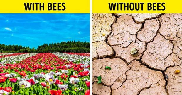 Ong mật trên thế giới đang có nguy cơ tuyệt chủng cực lớn và đây là lý do chúng ta không thể để điều đó xảy ra - Ảnh 3.
