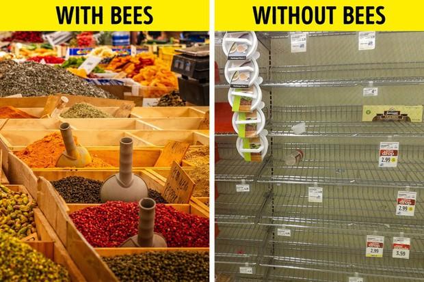 Ong mật trên thế giới đang có nguy cơ tuyệt chủng cực lớn và đây là lý do chúng ta không thể để điều đó xảy ra - Ảnh 4.