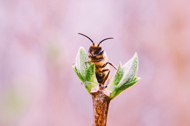 Ong mật trên thế giới đang có nguy cơ tuyệt chủng cực lớn và đây là lý do chúng ta không thể để điều đó xảy ra - Ảnh 6.