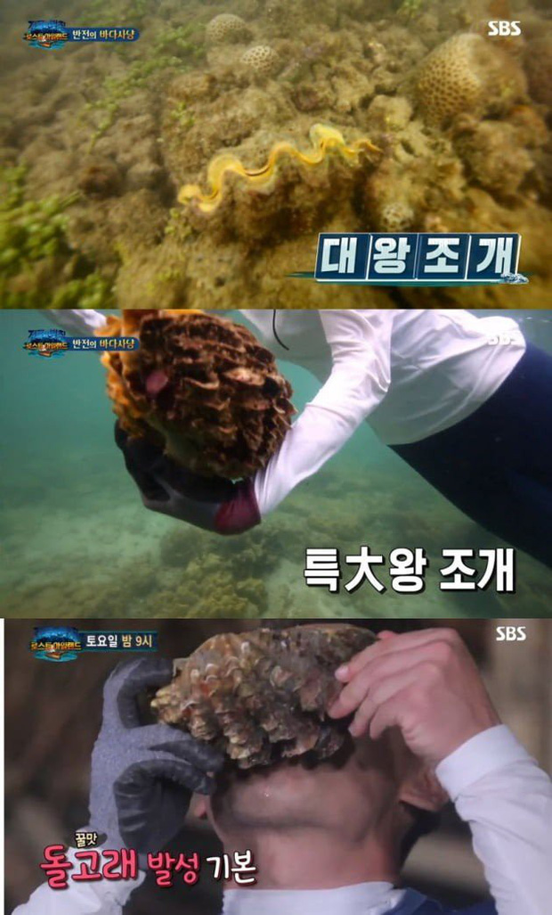 Nữ diễn viên Hàn Quốc đối diện án tù vì bắt 3 con sò tai tượng quý hiếm của Thái Lan khiến dư luận phẫn nộ - Ảnh 3.
