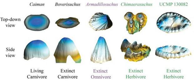 Nghiên cứu mới: Tổ tiên của cá sấu ngày nay là loài ăn chay - Ảnh 1.