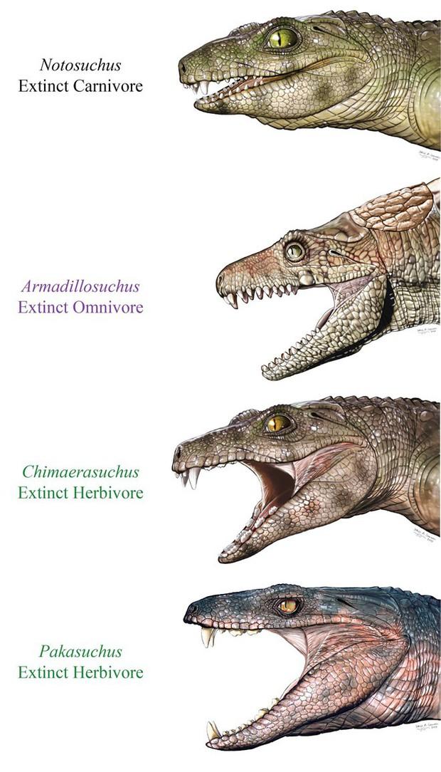 Nghiên cứu mới: Tổ tiên của cá sấu ngày nay là loài ăn chay - Ảnh 2.