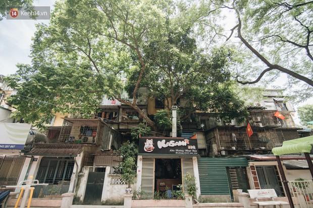 Kỳ lạ cây xanh mọc xuyên những căn nhà trong khu tập thể 60 năm tuổi ở Hà Nội - Ảnh 1.