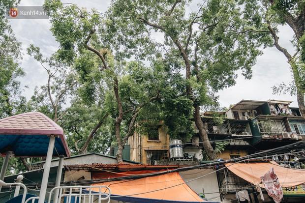 Kỳ lạ cây xanh mọc xuyên những căn nhà trong khu tập thể 60 năm tuổi ở Hà Nội - Ảnh 2.
