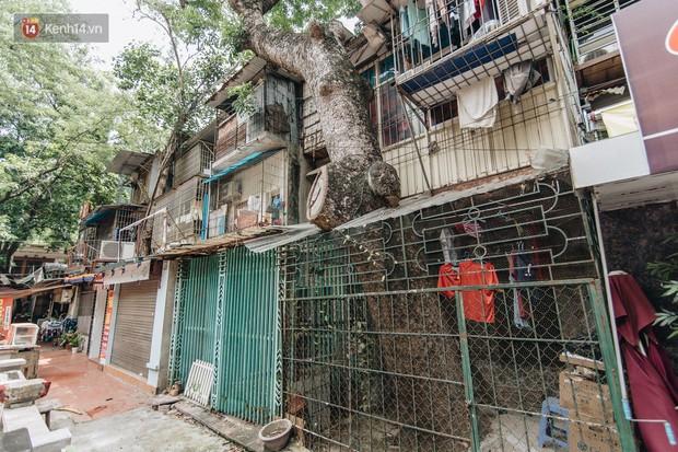 Kỳ lạ cây xanh mọc xuyên những căn nhà trong khu tập thể 60 năm tuổi ở Hà Nội - Ảnh 4.